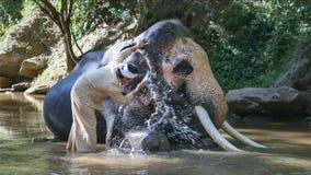 有大象的亚裔mahout在小河,泰国 股票录像