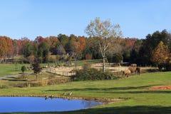 有大象的Asheboro动物园 图库摄影