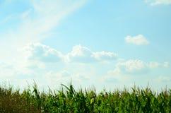 有天空的玉米田 免版税库存照片