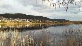 有天鹅的湖 免版税库存图片
