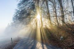 有太阳光芒光的冬天森林通过雾 免版税库存照片