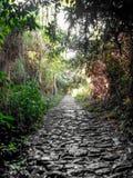 有太阳光芒和风景背景的森林道路,在白天期间,奥斯纳布吕克,德国,欧洲 库存图片