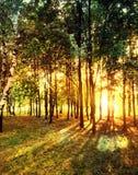 有太阳光芒的春天森林 库存照片