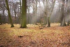 有太阳光芒的森林沼地 图库摄影