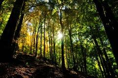 有太阳光芒的神秘的秋天森林 库存照片