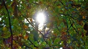 有太阳光芒的秋天风景被染黄的森林 库存图片