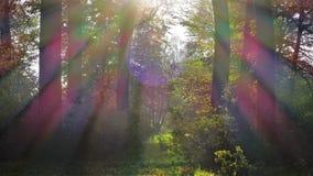 有太阳光芒的秋天风景被染黄的森林 免版税库存照片