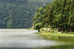 有太阳反射和醒目的树的湖 库存图片