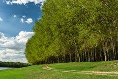 有太阳的夏天森林 免版税库存图片
