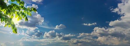 有太阳的天空全景从后面分支和云彩发出光线 免版税图库摄影
