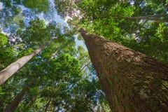 有太阳的春天森林 免版税库存照片