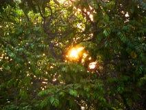 有太阳的树叶子在后面 免版税库存照片