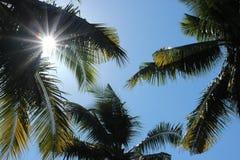 有太阳的棕榈叶 免版税库存照片