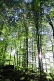 有太阳的森林在回到光 免版税图库摄影