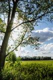 有太阳的美丽的捷克农村草甸 免版税图库摄影