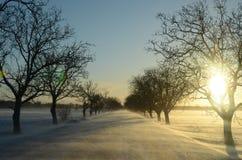 有太阳的被雪包围住的路 免版税库存图片