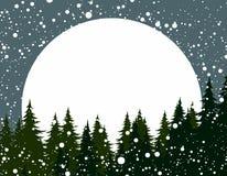 有太阳黎明的冬天森林 库存图片