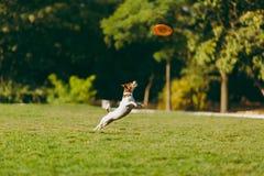 有女儿的妈妈和狗在有飞行盘的公园走 免版税库存照片
