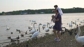 有她的喂养天鹅和小的鸭子的女婴女儿的年轻母亲鸟面包在穿被加点的礼服的河 影视素材