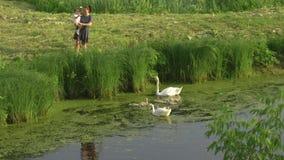 有她的女婴女儿哺养的天鹅和小的鸭子的年轻母亲在穿被加点的礼服的一个绿色公园池塘- 股票视频
