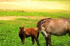 有她的婴孩的驴妈妈 库存照片