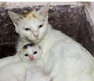 有她的婴孩的母亲 免版税库存照片