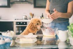 有她的狗的妇女做早餐 免版税库存图片