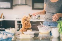 有她的狗的妇女在厨房烹调 免版税图库摄影