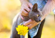 有她的猫的资深妇女 库存图片