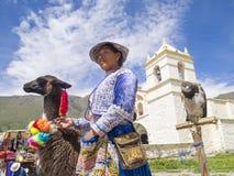 有她的羊魄的秘鲁妇女。 免版税库存照片