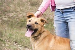 有她的黄色杂种幼小狗的少年 免版税库存图片