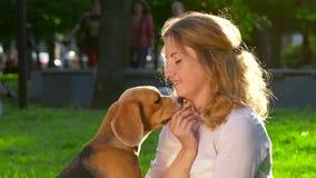 有她美丽的小猎犬的妇女在公园 慢 股票录像