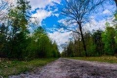 有好的云彩的森林道路 库存图片