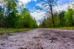有好的云彩的森林道路 库存照片