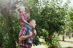 有孙女的祖父有苹果计算机的在苹果树 免版税库存照片