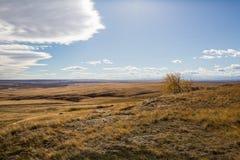 有孤立树的西部辗压大草原 免版税库存图片