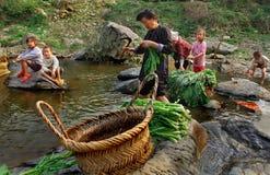 有孩子的一条农村河的,洗涤莴苣亚裔妇女。 图库摄影