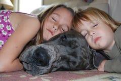 有孩子的丹麦种大狗 库存图片
