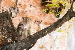 有孩子的短尾猿母亲树的 两猴子 库存照片