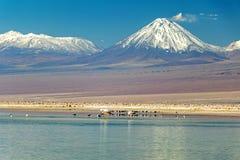 有安地斯山的火鸟的Chaxa盐水湖,位于阿塔卡马盐沼,智利的中心的火鸟天堂 图库摄影