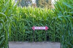 有定向标志的玉米迷宫 免版税库存照片