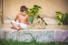 有室外的约克夏狗的男孩 库存图片
