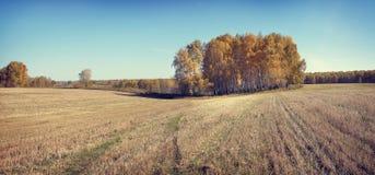有宽被割的领域的秋天全景 库存照片
