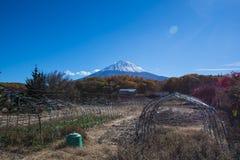 有富士山的农场 库存图片