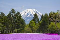 有富士山的桃红色青苔庭院 免版税库存图片