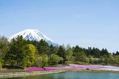 有富士山的桃红色青苔庭院 免版税库存照片