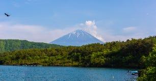 有富士山的Aokigahara森林 免版税库存照片