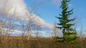 有寒带草原的全景 影视素材