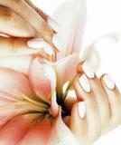 有对花百合关闭负的修指甲的秀丽精美手被隔绝在白色,妇女完善的形状 免版税库存照片