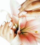 有对花百合关闭负的修指甲的秀丽精美手被隔绝在白色 库存图片